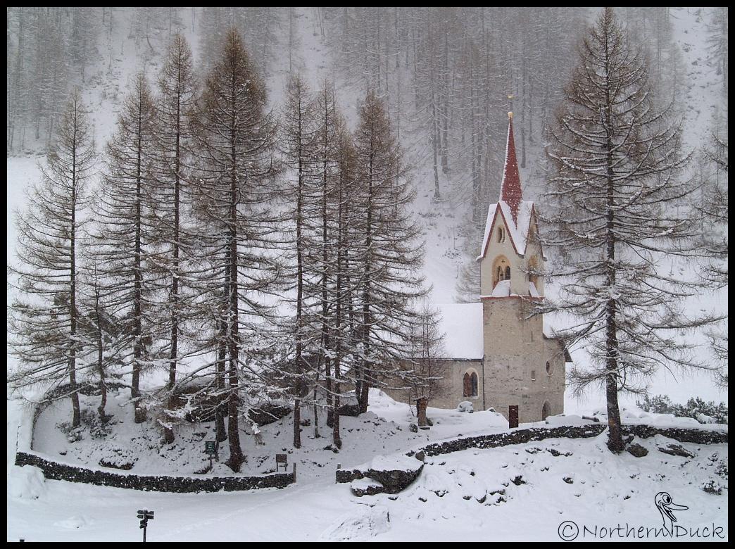 Weihnachten im Klee - Ostern im Schnee... Foto & Bild | europe ...