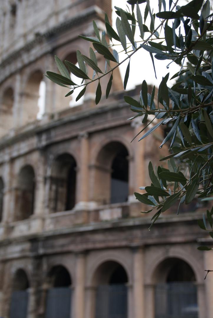 Weihnachten in Rom (7) - Immergrün Foto & Bild   europe, italy ...