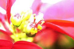 Weihnachten in voller Blüte