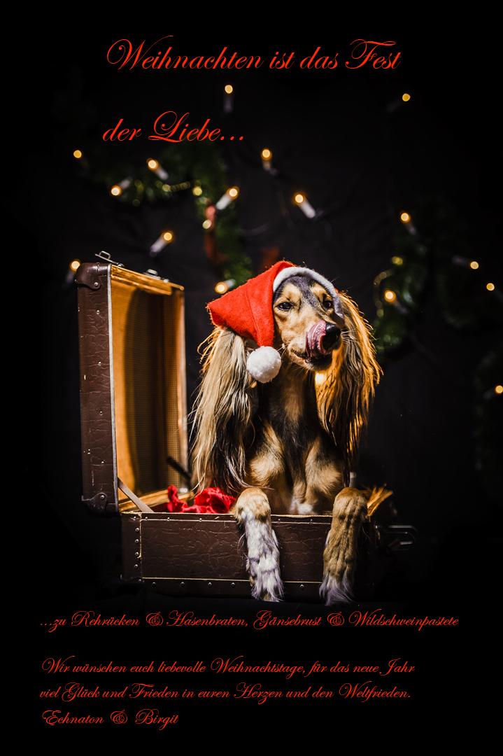 Weihnachten Ist.Weihnachten Ist Das Fest Der Liebe Foto Bild Tiere Haustiere