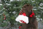 Weihnachten naht....