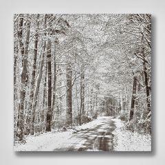 Weihnachtlich glänzed der Wald