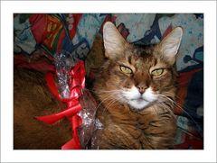 Weihnachts - Bändeli