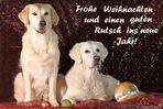 Weihnachts-Goldis Dana und Abbee