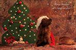 *Weihnachts-Wichtel-Maya*