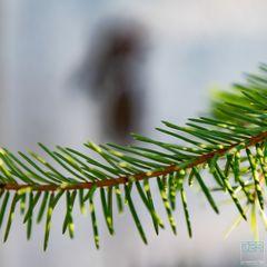 Weihnachtsbaum 2021