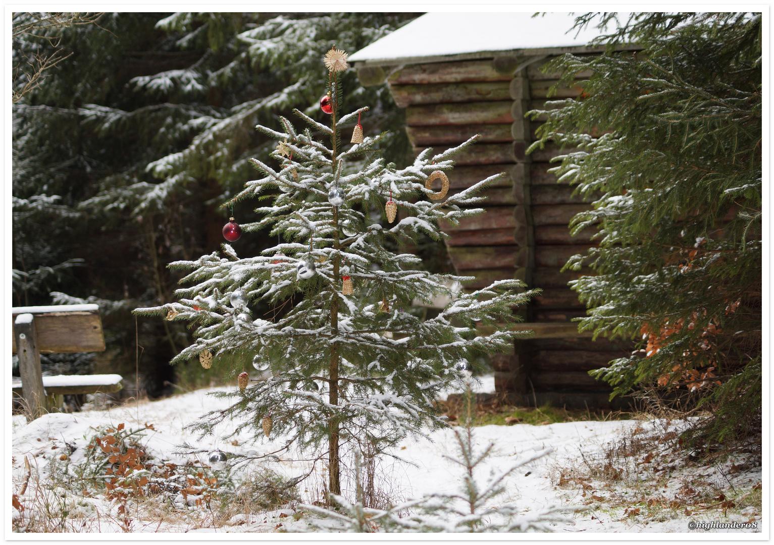 Weihnachtsbaum 3 Foto & Bild | gratulation und feiertage ...