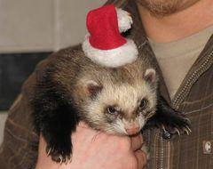 Weihnachtsfrett Mikey