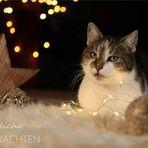 *******Weihnachtsgrüße