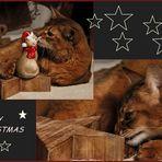 * Weihnachtsgrüße *