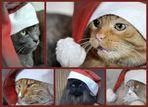 Weihnachtsgrüße aus der katzenstube