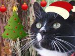 ***Weihnachtskater Tommy****