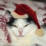 Weihnachtskatz