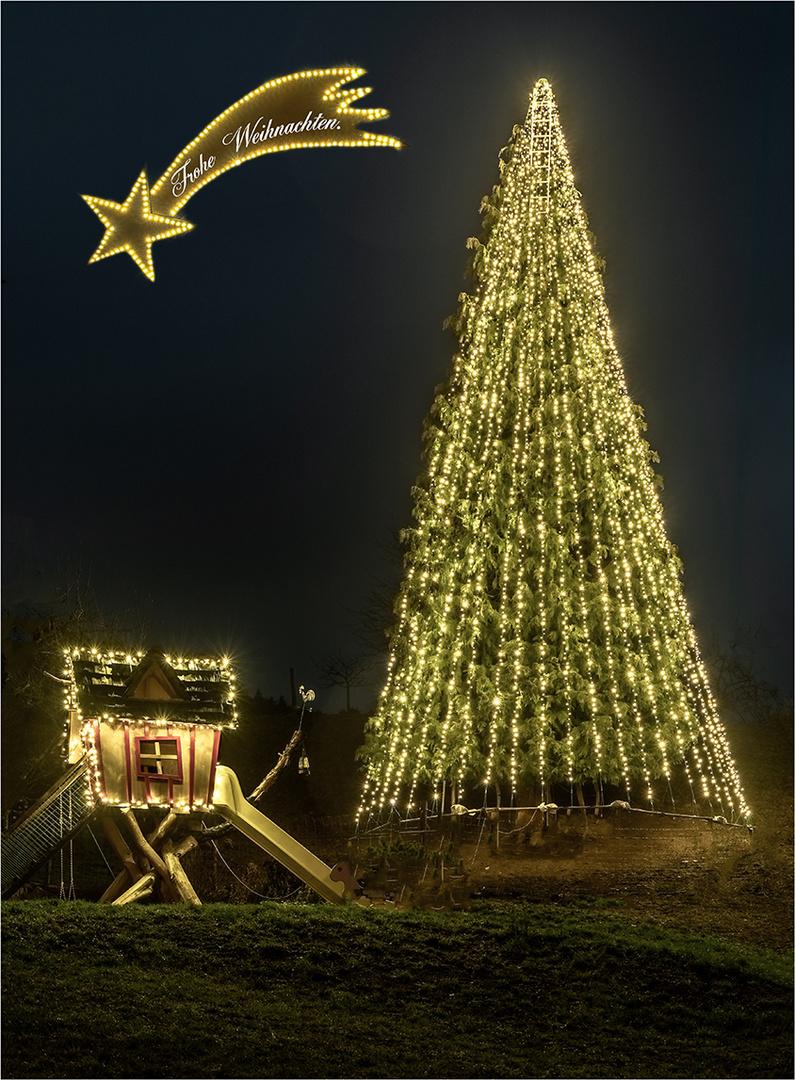 Weihnachtsstern Nordrach