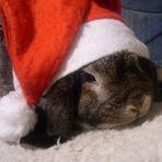 Weihnachtsstimmung bei Teo