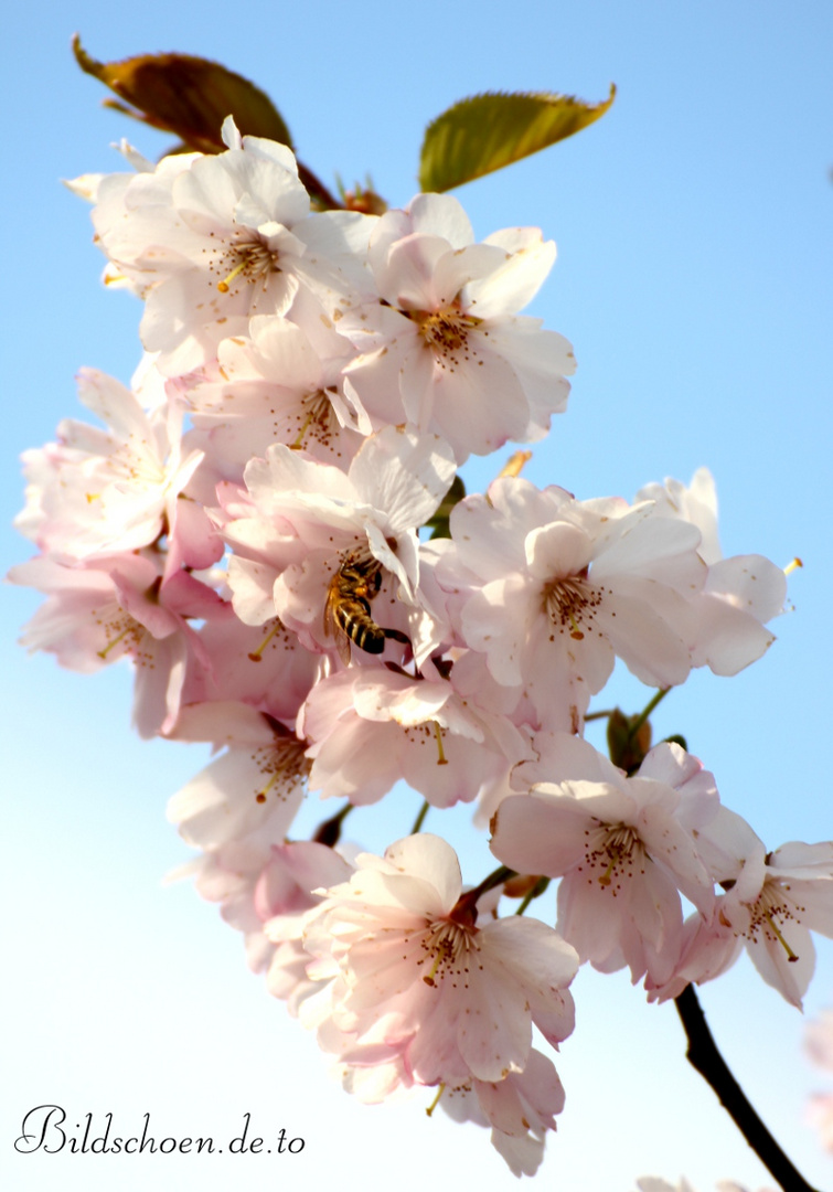 Weil der Frühlings die schönste Jahreszeit ist!