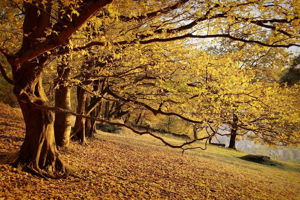 Weil der Oktober gerade so golden ist (4)