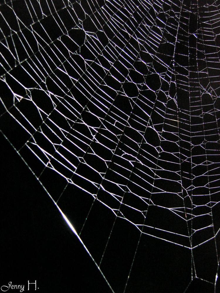 """""""...weil die Spinne dich sonst frisst """""""