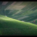 Wein-Berge-Licht-Blick