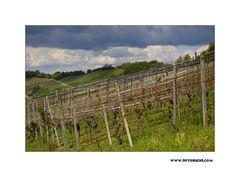 Wein Frühling #2