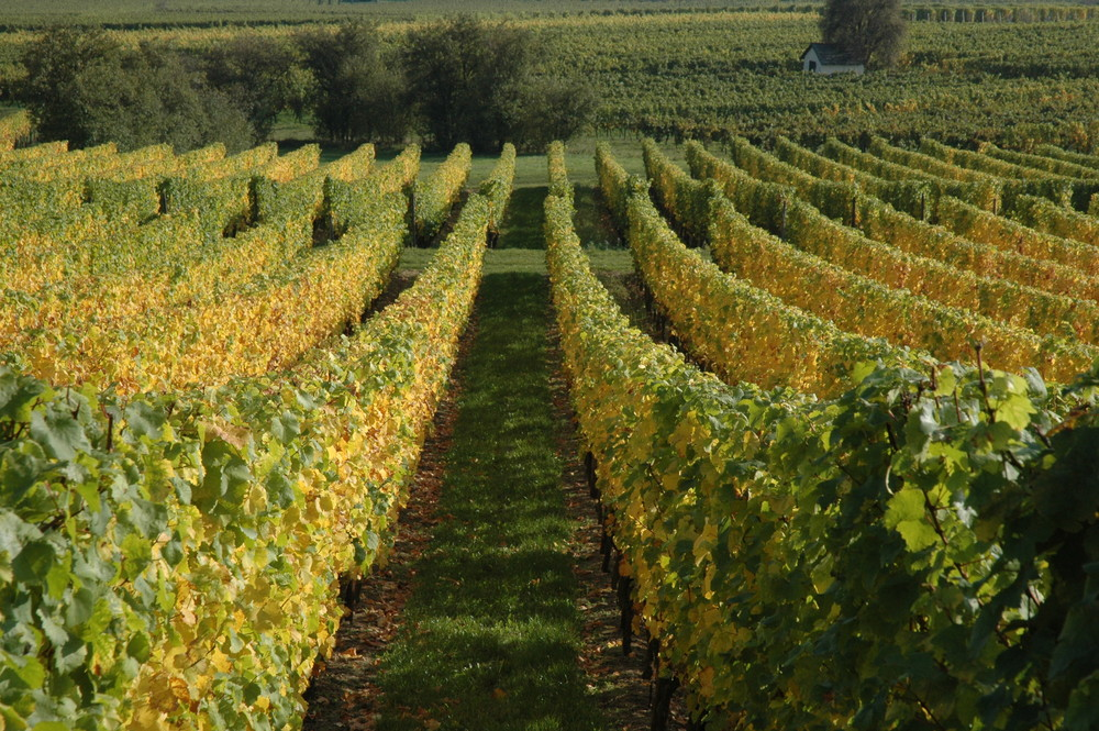 Wein-Kultur