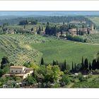 Weinanbau bei San Gimignano