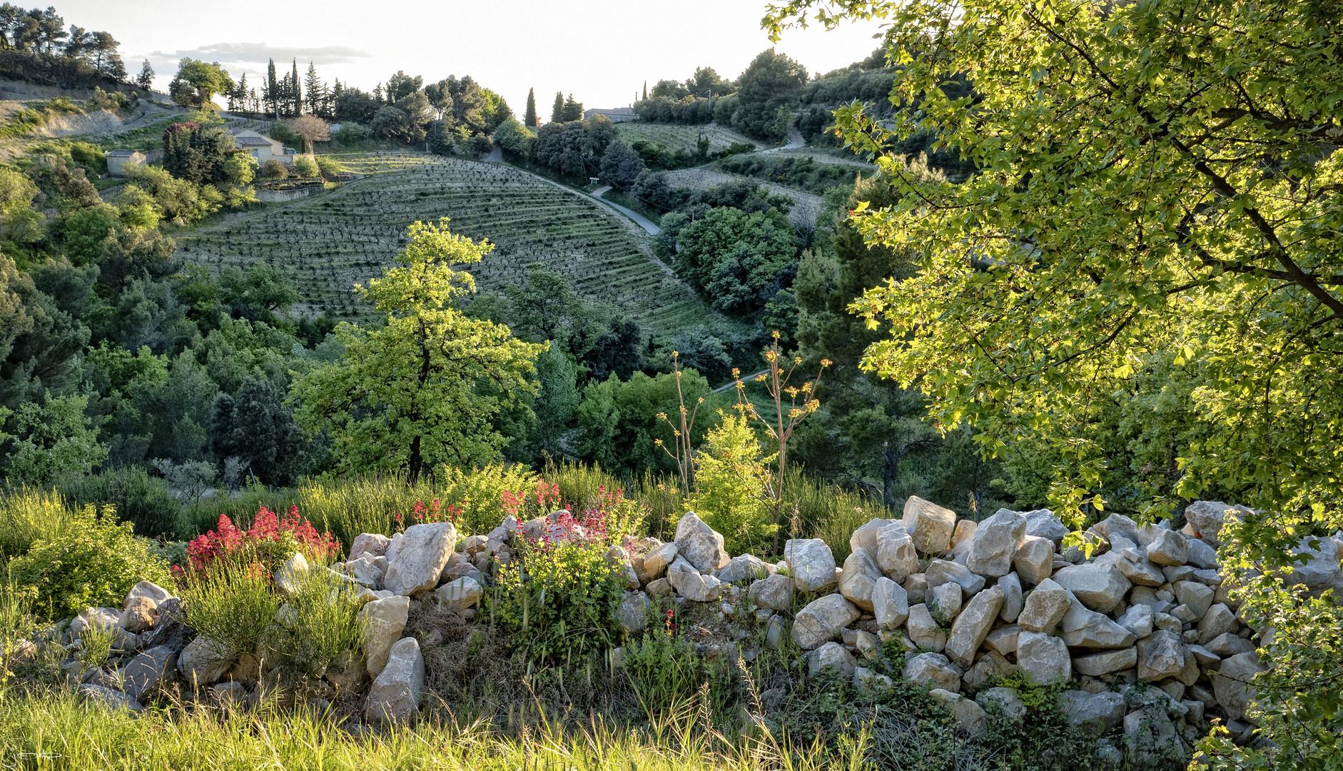 Weinbaugebiet Gigondas