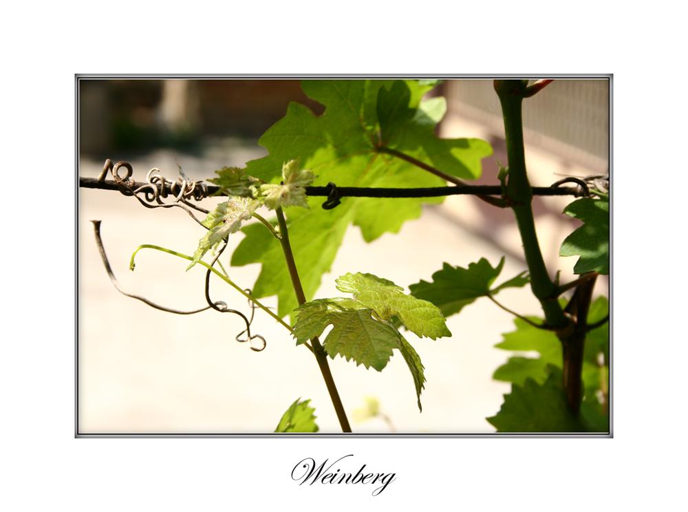 Weinberg 2