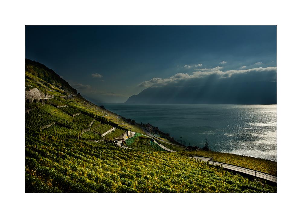 Weinberg am Genfer See