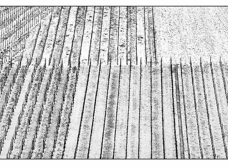 Weinberg-Grafik im Winter