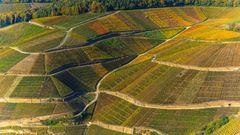 Weinberg im Herbst #2