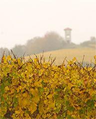 Weinberg im Herbst 2
