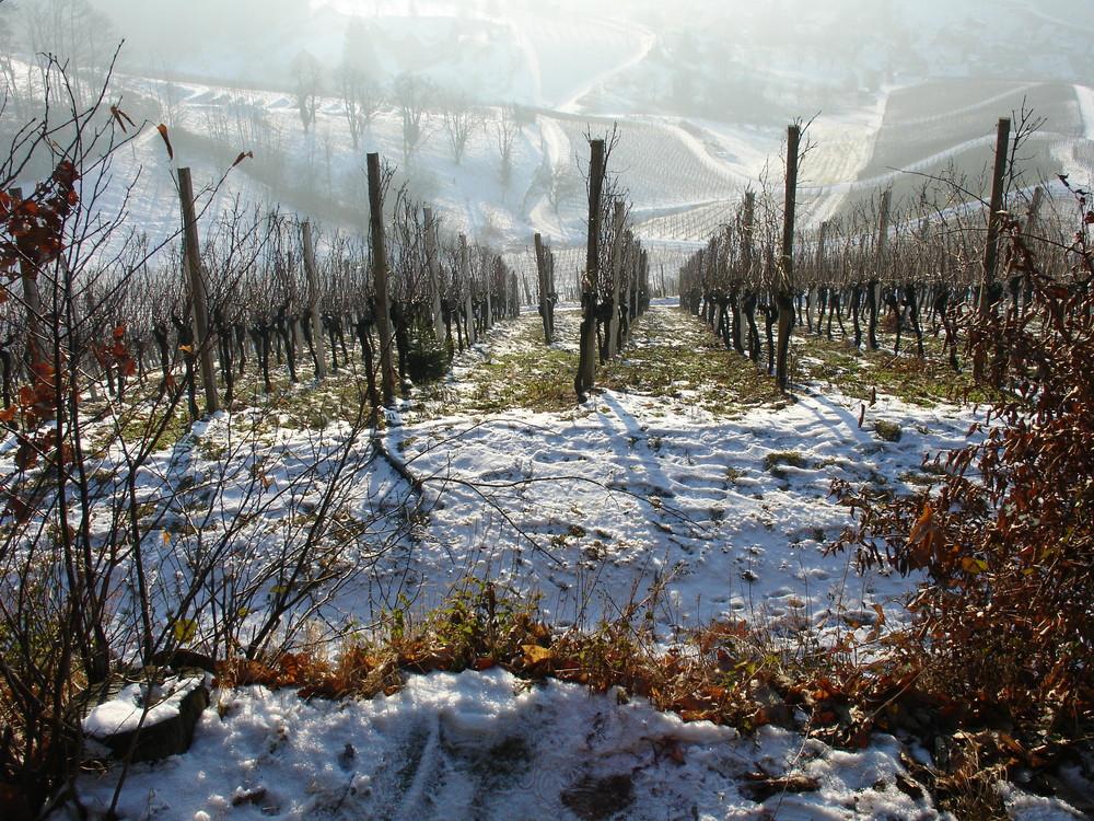 Weinberg im Winter 2009