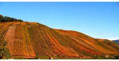 Weinberg in Herbstfarben