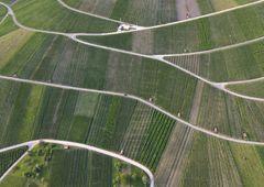 Weinberg-Landschaft