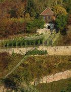 Weinberg zwischen Naumburg und Bad Kösen