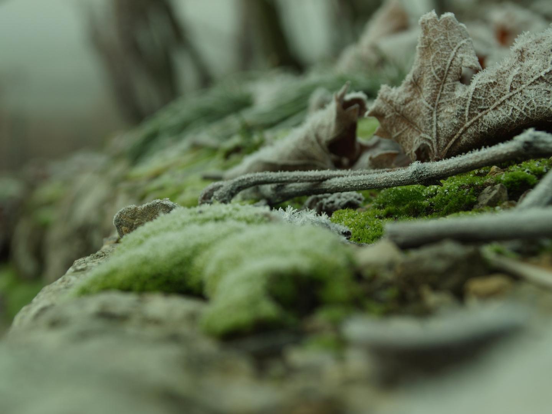 Weinbergblätter und Äste im Reif