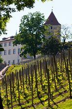 Weinberge der Prager Burg