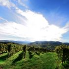 Weinberge Durbach, vineyards, viñedos de Durbach,