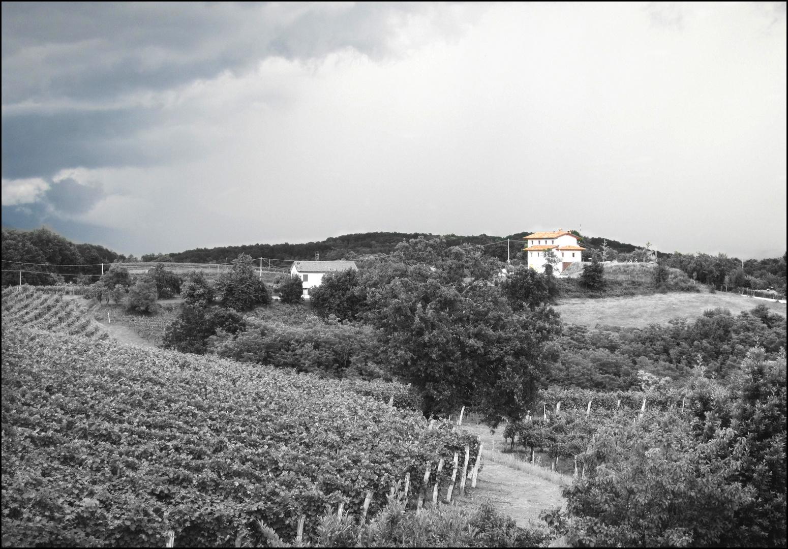 Weinberge im Friaul