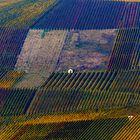 Weinberge im Herbst #2