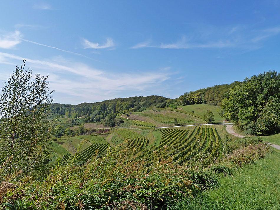 Weinberge im Kaiserstuhl