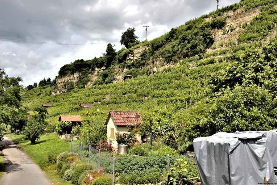 Weinberge im Neckartal