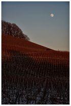 Weinberge in Beilstein vor aufgehendem Mond
