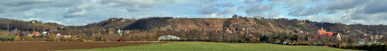 Weinberge in Radebeul bei Dresden