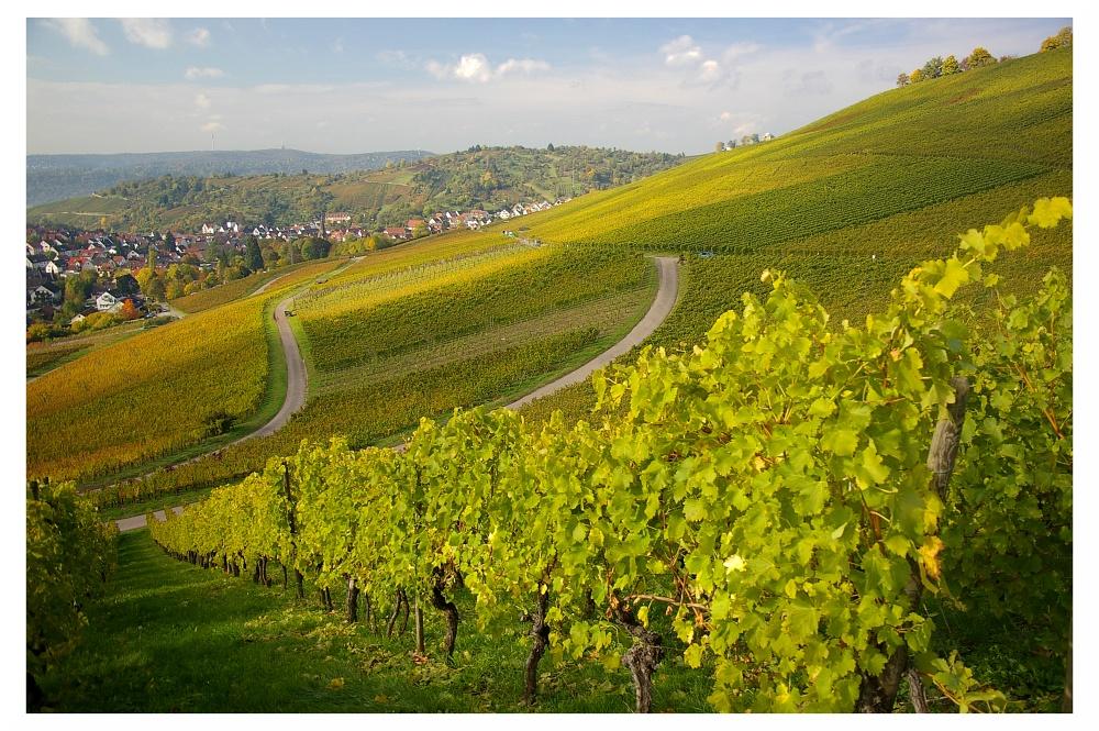 Weinberge über Stuttgart-Uhlbach