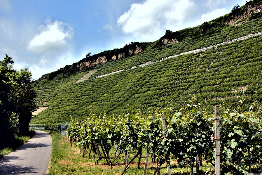 Weinberge von Mundelsheim II