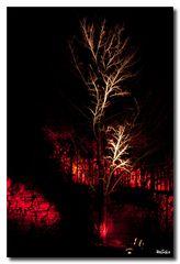 Weinbergnacht 2012 - Der Baum