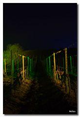 Weinbergnacht 2012 - Die Rebe 2