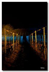 Weinbergnacht 2012 - Die Rebe
